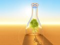Tree a birch inside a bottle in the desert Royalty Free Stock Image
