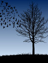 Tree and Birds Royalty Free Stock Photography