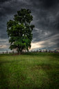 Tree on bloody lane antietam national battlefield sharpsburg maryland usa Royalty Free Stock Photo