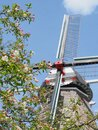 Tree blossoms in front of windmill in Holland Michigan Royalty Free Stock Photo