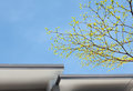 Tree blue sky Royalty Free Stock Photo