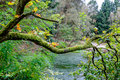 Tree branch covered with moss and in the background a forest at lake Stock Photo