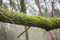 Tree branch covered with moss old Stock Photos