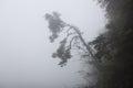Tree branch at foggy volcano lake