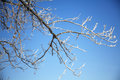 Tree branch full of frost Royalty Free Stock Photo