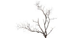 Tree branch without leaf isolated on white Royalty Free Stock Photo
