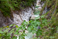 Tree branch over flowing water in a gorge alps austria Royalty Free Stock Photos