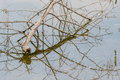 Tree branch reflection in water Royalty Free Stock Photo