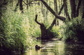 Tree branch in the river landscape of flowing between water grasses and water Stock Images