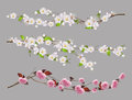 Tree branch, spring flowers vector set