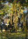 Tree branch with yellow leaves. Autumn time. Beautiful autumn background. Royalty Free Stock Photo