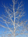 Tree and branches. Royalty Free Stock Photo