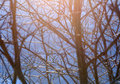 Tree branches closeup winter nature image alight by sunlight can be used as a wallpaper background or postcard Royalty Free Stock Image