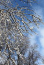 Tree branches coverd in heavy snow Stock Photos
