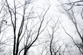 Tree branches in foggy morning Royalty Free Stock Photo