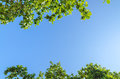Tree branches with leaves against blue sky green and cloud in summer Royalty Free Stock Photos
