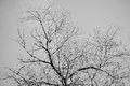 Tree branches silhouette against clear sky. Black and white background. Abstract symbol concept. With place for your Royalty Free Stock Photo