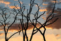 Tree branches silhouettes Royalty Free Stock Photo