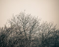 Tree branches silhouettes on background overcast sky color toned image Royalty Free Stock Images