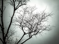 Tree branches silhouettes on background overcast sky color toned image Royalty Free Stock Image
