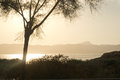 Tree in brilliant sunset light can pastilla mallorca balearic islands spain Stock Photography