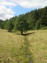 Tree and brook in sauerland germany Royalty Free Stock Photography