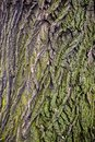 Tree brown bark texture with green moss Royalty Free Stock Photo