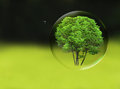Tree in a bubble room for text or copy space Royalty Free Stock Photo