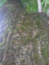 tree burk perfect tone Royalty Free Stock Photo