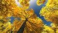 Tree canopy Royalty Free Stock Photo