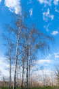 Tree canopy on the background the blue sky branch Stock Photos