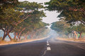 Tree canopy extended road through the made of trees Royalty Free Stock Photos