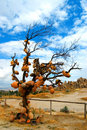 Tree in cappadocia Royalty Free Stock Images