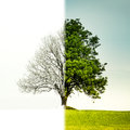 Tree change from winter to summer Royalty Free Stock Photo