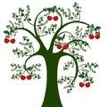 Tree and cherry