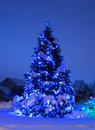 Tree with Christmas Lights in Blue Royalty Free Stock Photo