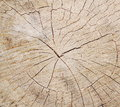 Tree circle texture close up Royalty Free Stock Image