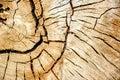 Tree circles