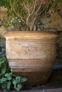 Tree in a clay pot Royalty Free Stock Photo