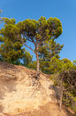 Tree on a cliff growing from in croatia Stock Image