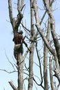 Tree climber Royalty Free Stock Photo
