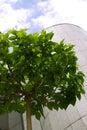 Tree close-up Royalty Free Stock Photo