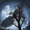 Tree and clouds in the sky Royalty Free Stock Photo