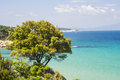 Tree coast aegean sea greece halkidiki olimpias Royalty Free Stock Image