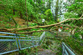 Tree collapse after typhoon in city Stock Photo
