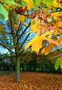 Tree with colorful autumn leaves Royalty Free Stock Photos