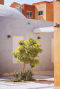Tree in courtyard image of a the egypt Stock Photo