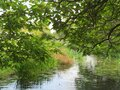 Tree covered river bank shading the reeds Royalty Free Stock Photo