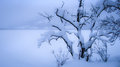 Tree covered with snow winter landscape by a lake Stock Image