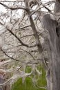 Tree covered with webs Royalty Free Stock Photo